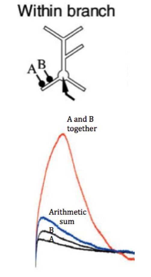 Suprathreshold Neural Signaling
